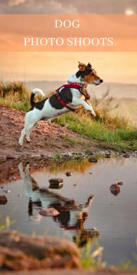 DOG PHOTO SHOOTS (1)
