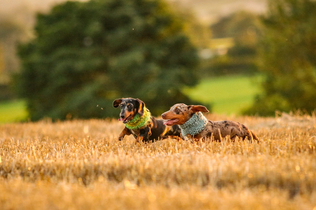 FLORAL DOXIES (141)