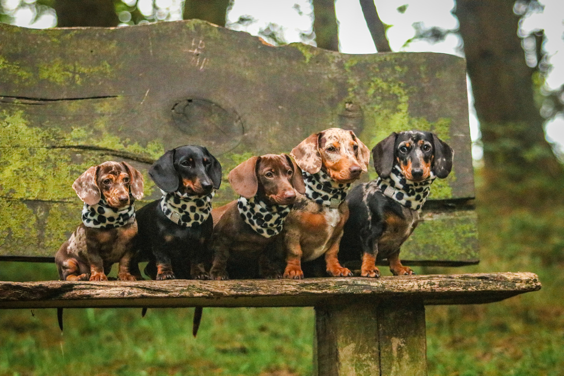 FLORAL DOXIES (24)