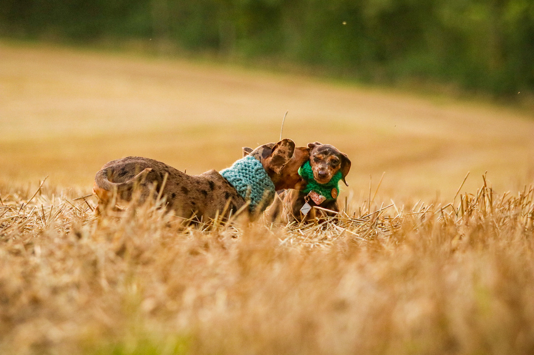 FLORAL DOXIES (65)